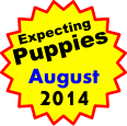 Expecting Puppies   August 2014
