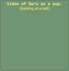 Video of Guru as a pup. (Barking at a ball)