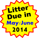 Litter Due in May/June 2014